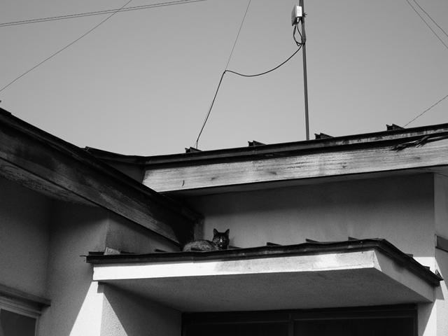 IMG_0246_R.jpg