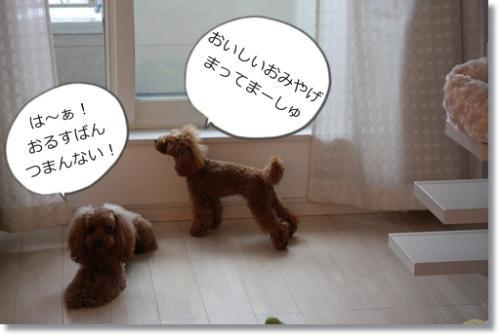 201101051_convert_20110105154608.jpg