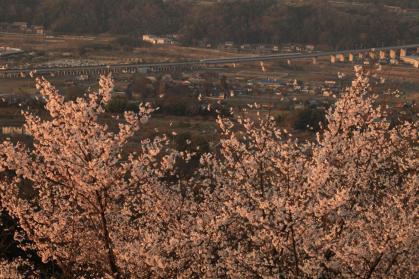 変換 ~ IMG_1055桜と新幹線
