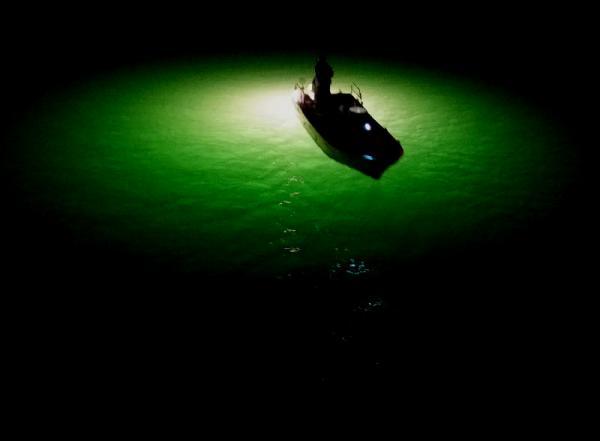 シラス漁17