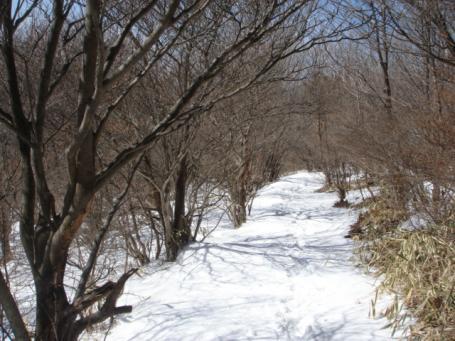 雪積もる道