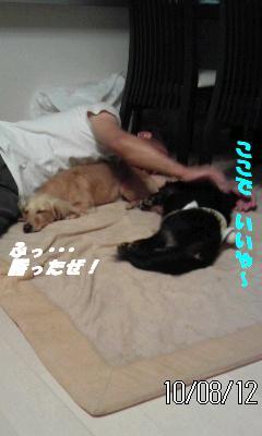 CAHL911A_20100813054505.jpg