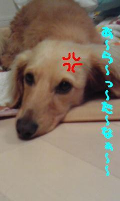 CAIMHKD2_20100905231310.jpg