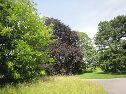 キューガーデン樹木