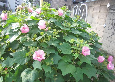 真夏の花1