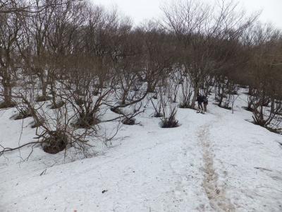 角田山残雪