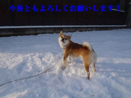 P1010421_3.jpg