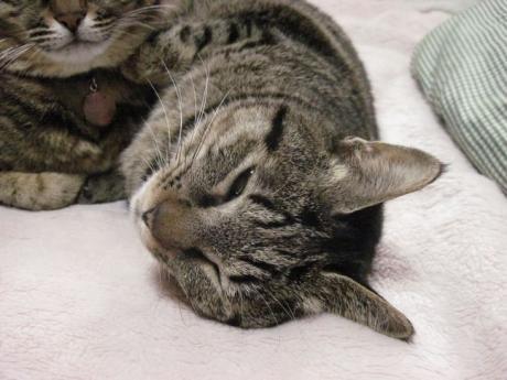 110324猫団子その4b