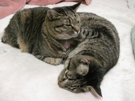 110324猫団子その2b