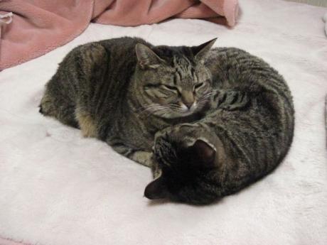 110324猫団子その1b