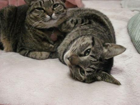 110324猫団子その3b