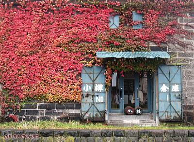 小樽 倉庫 ツタの紅葉