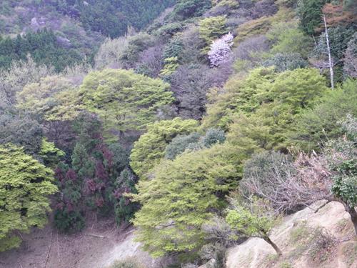 2011 0415 新緑