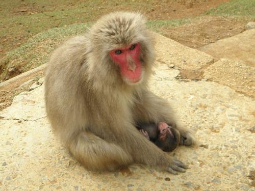 2011 0425 ユン87-96 出産2