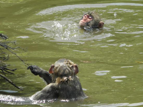 2011 0629 水遊び