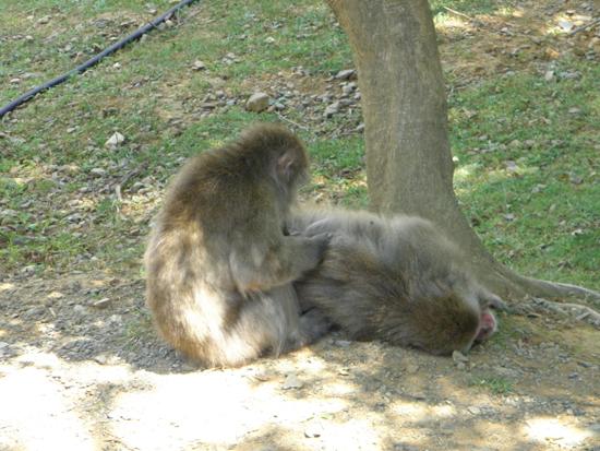 2011 0714 木陰
