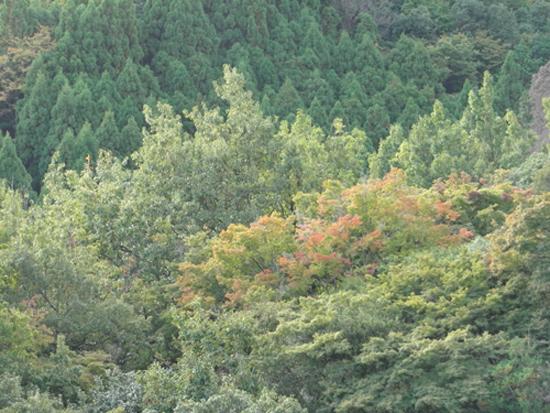2011 1026 紅葉
