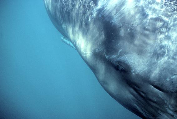2005-06-23--whale.jpg