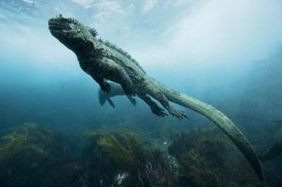 泳ぐイグアナ