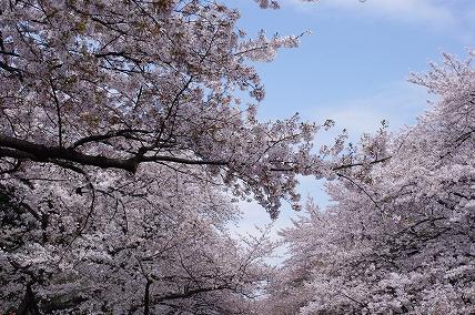 上野公園4.10