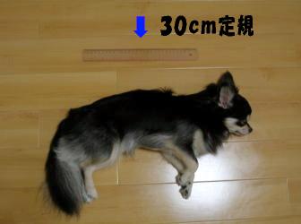 30cm以上