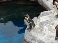 孤高のペンギン。