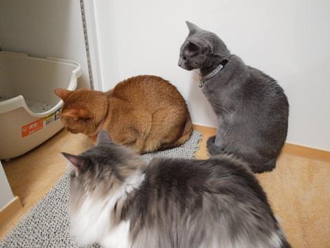 3にゃん集まる(2009.11.03)