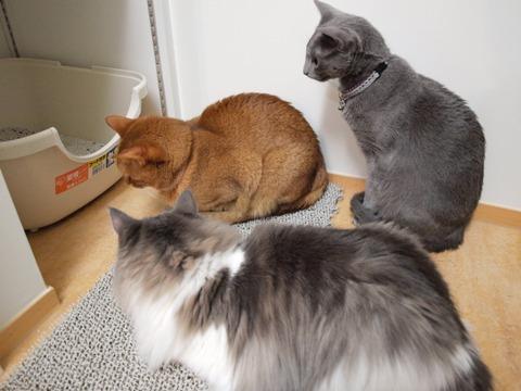 トイレ前に集合!(2009.11.03)
