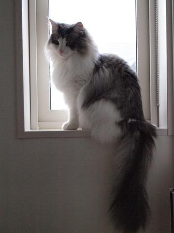窓辺のフレイヤ01(2009.11.09)