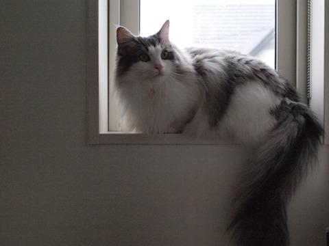 窓辺のフレイヤ02(2009.11.09)