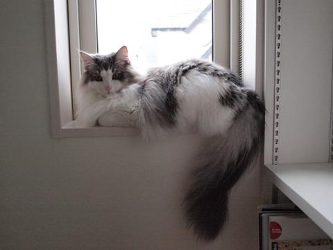 窓辺のフレイヤ04(2009.11.09)