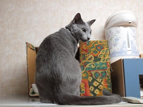 レイゾウコの上で02(2009.11.09)