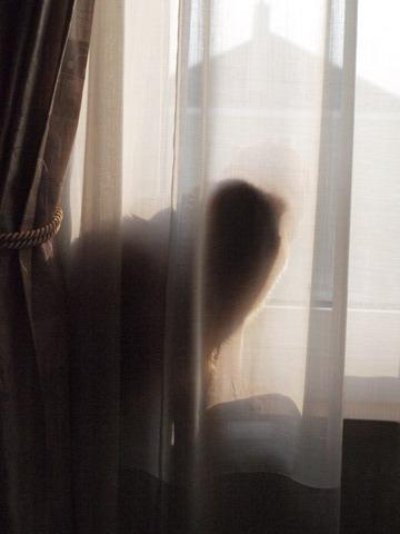 オブジェなジョゼ(2009.11.09)