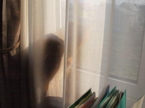 カーテンの向こう側(2009.11.09)