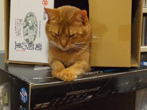 マンションで01(2009.11.11)