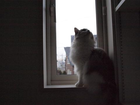 書庫の窓(2009.11.18)
