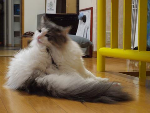 お手入れでしゅ(2009.11.24)