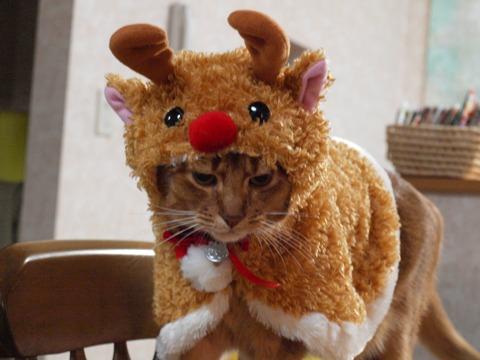 クリスマスなのよっ(2009.12.01)