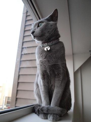 ニコライ、お行儀イイ(2009.12.02)