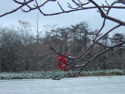 寒そうナナカマド(2009.12.03)