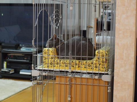 あごのせにゃ(2009.12.08)