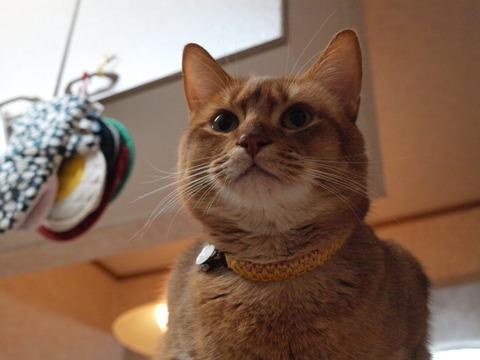 よろしくなのよっ(2009.12.27)