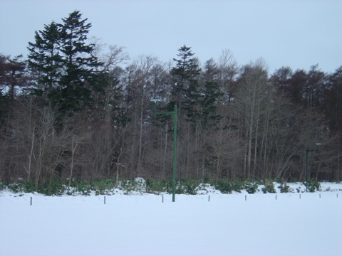 でも小雪(2010.01.06)