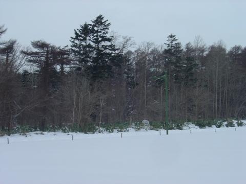 朝の職場地方(2010.01.12)