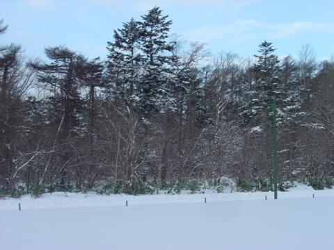 雪が降りました(2010.01.14)