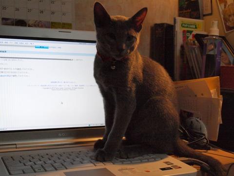 パソコンアレク(2010.01.15)