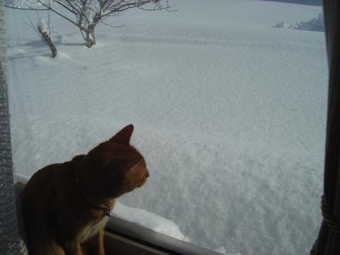 たいへんなのよっ(2010.01.17)