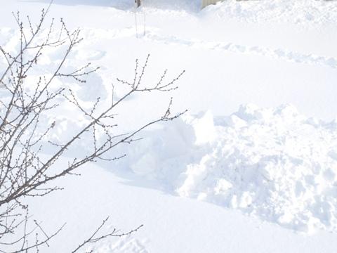 雪雪雪(2010.01.18)