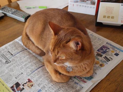 新聞、好きなのよっ01(2010.01.18)