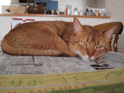 新聞、好きなのよっ03(2010.01.18)